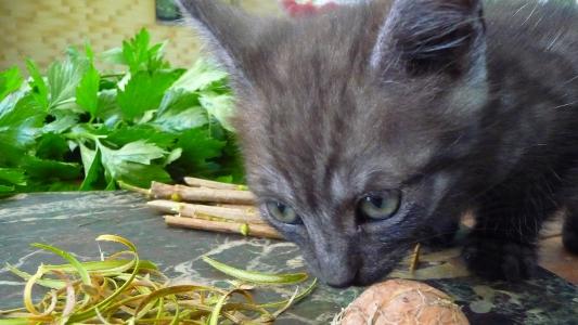 kot przygląda się akcji pozyskiwania kory kaliny