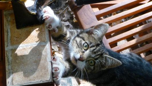 kot pomaga mielić składniki przyprawy do piernika