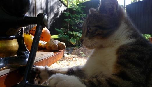 kotek pomaga mielić składniki przyprawy do piernika