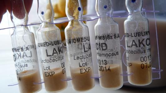 szczepienie mleka sojowego bakteriami probiotycznymi
