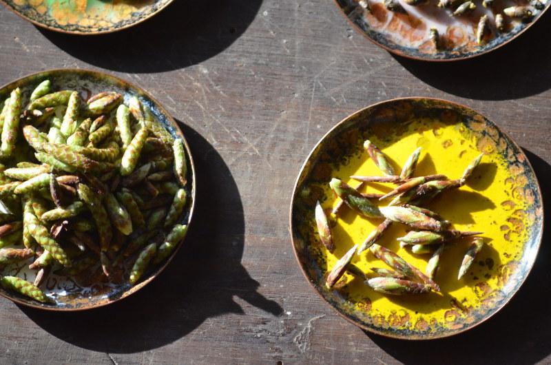 pączki talerzyki żółty
