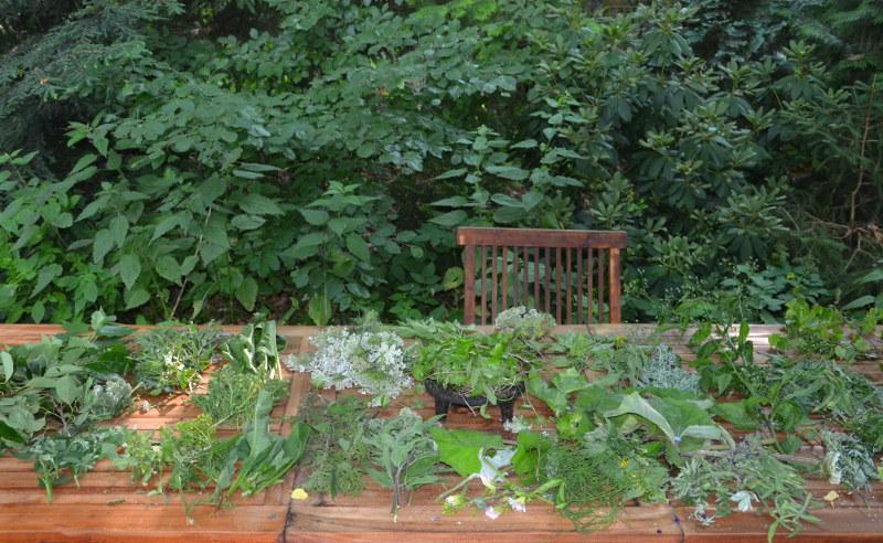 herbicraft skół 1
